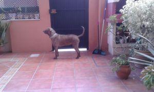Vicky (7)